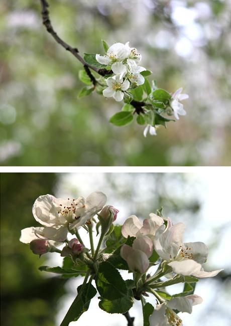 Un po' di primavera